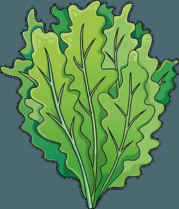 Salad 클립 아트