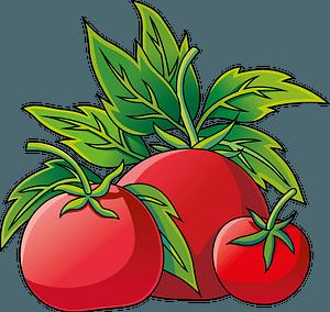 Tomato 클립 아트