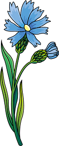Wildflower knapweed clipart