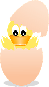 Baby duck hatching clipart