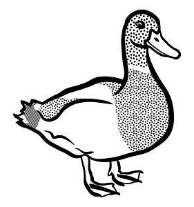 Mallard Duck - Black and White clipart