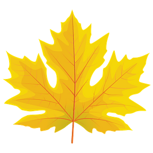 Big leaf maple autumn leaf clipart