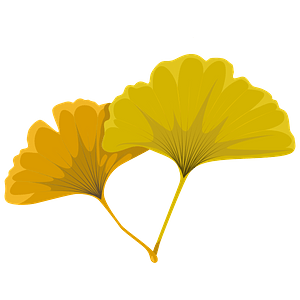 Maidenhair tree yellow leaf clipart