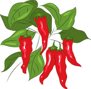 Chili clipart