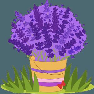 Lavender clipart
