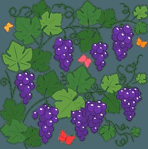 Grapevine clipart