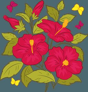 Hawaiian hibiscus clipart