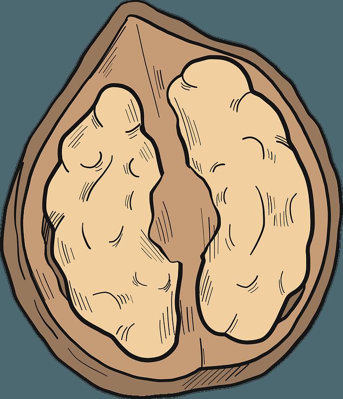Walnut Clip Art