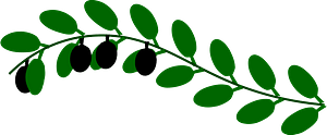 Olive Branch clipart