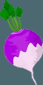 Turnip (Vegetable) clipart