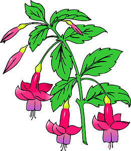 Flowering Plant with Pink Flowers clipart