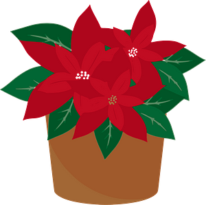 Poinsettia Plant in a Brown Pot clipart