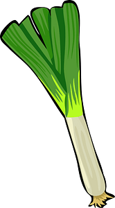 Spring Onion clipart