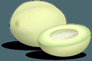 Honeydew Melon clipart