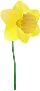 Daffodil on the Stem clipart