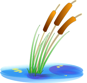 Cattails in the Water clipart