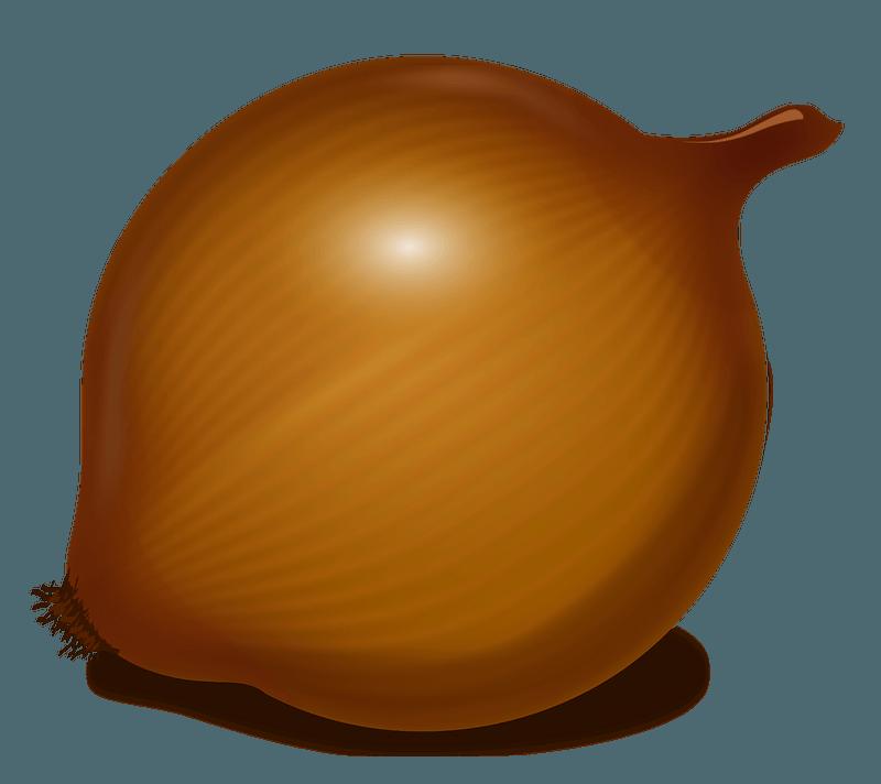 Onion clipart