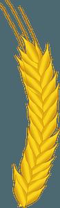 Wheat Plant Head clipart