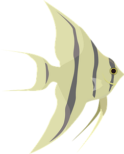 Клипарт Angelfish