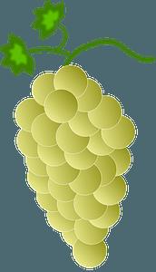 Green Grapes clipart