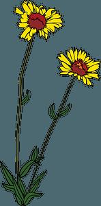 Gaillardia Aristata - Blanketflower of Sunflower Family clipart