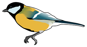 Great Tit clipart