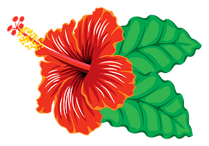Red Hibiscus clipart