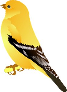 Gold Finch clipart
