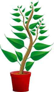 Green Tall Plant in Its Pot clipart
