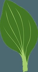Plant Leaf clipart
