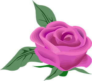 Pink Rose clipart