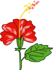 Red Hibiscus on the Stem clipart