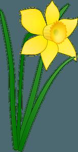 Yellow Daffodil clipart