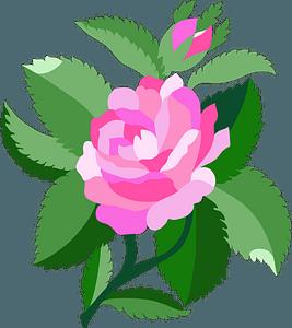 Design for Damask Rose clipart