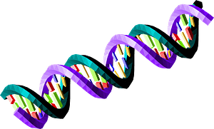 Double-Stranded Dna Sequence clipart