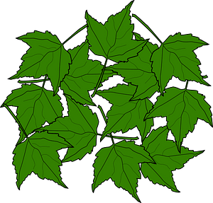 Green maple leaves clipart