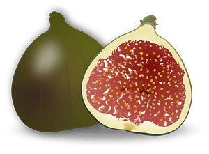 Fig Fruit clipart