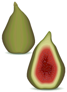 Figs clipart