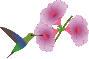 Hummingbird Feeding at a Pink Flower clipart