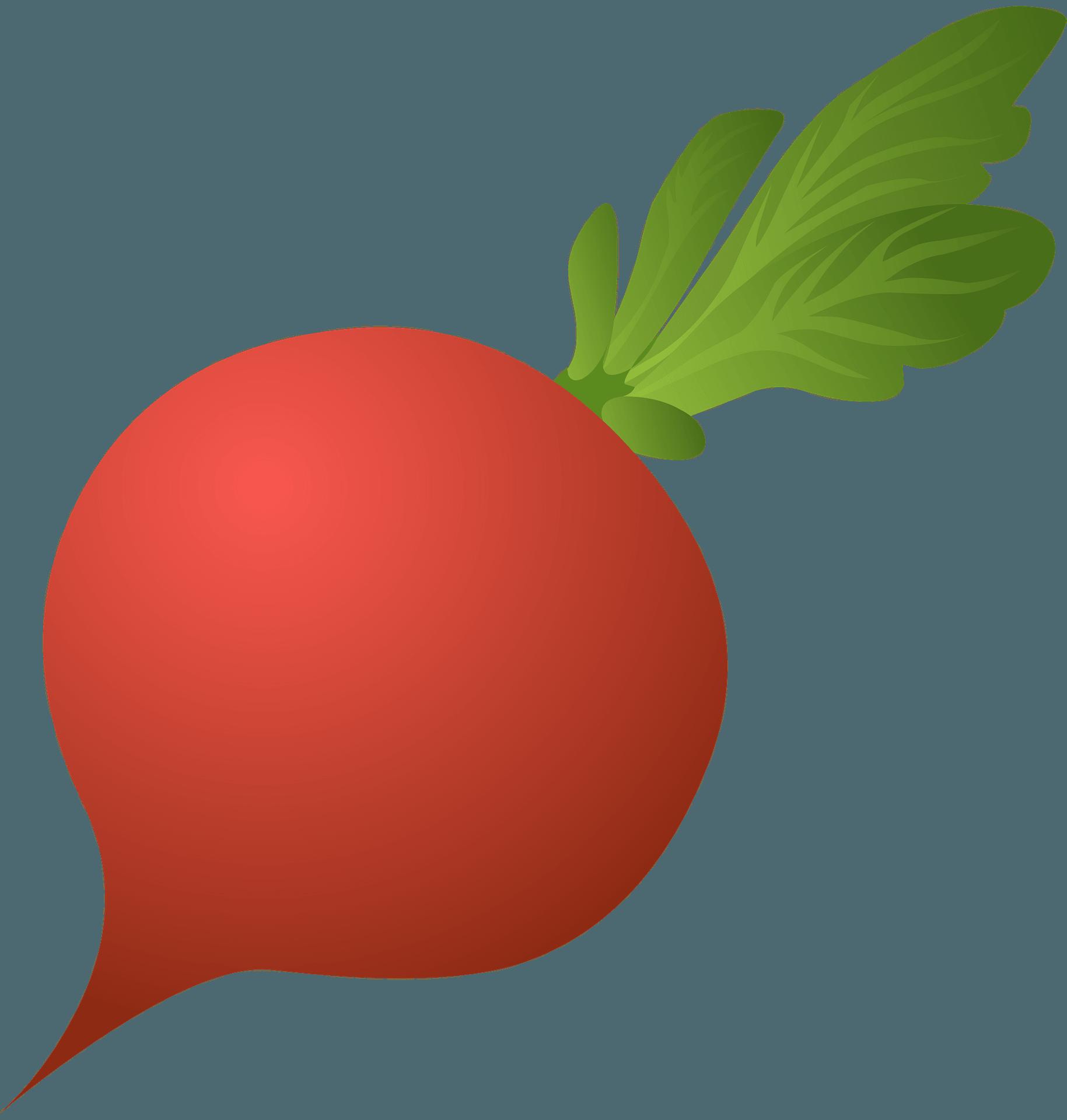 food radish clipart. free download transparent .png   creazilla  creazilla