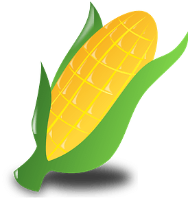Ear of corn in the shuck clipart