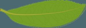 Laurel Leaf clipart