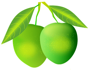 Green Mangos on the Branch clipart