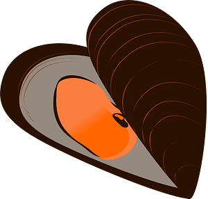 Mussel clipart