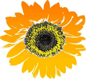 Sunflower Head clipart