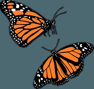 Monarch butterflies clipart