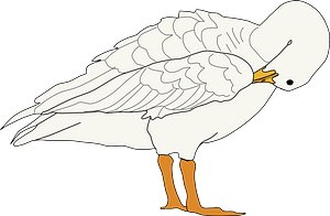 Goose with Its Head Tucked in Its Wing clipart
