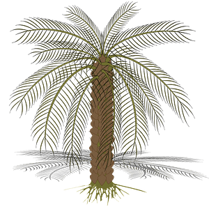 Bare Palm Tree clipart