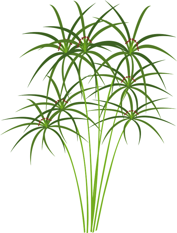 Papyrus Reeds Clipart Free Download Transparent Png Creazilla