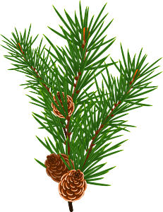 Pine Branch with Pine Cones clipart